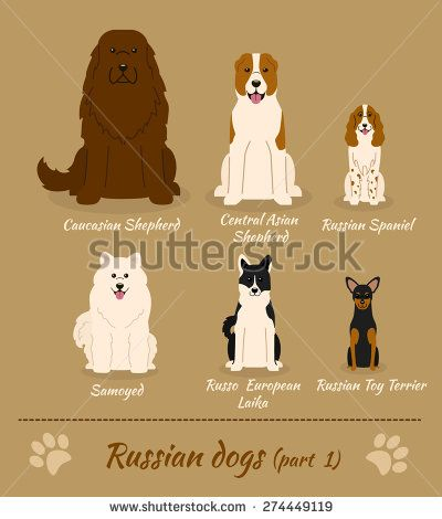 Set of Russian dogs - part 1. Vector Illustration of six different breeds of dogs: Caucasian Shepherd, Central Asian Shepherd, Russian Spaniel, Samoyed, Russo European Laika, Russian Toy Terrier