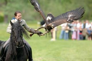 Falconry....with an Eagle...Is there another word for that.