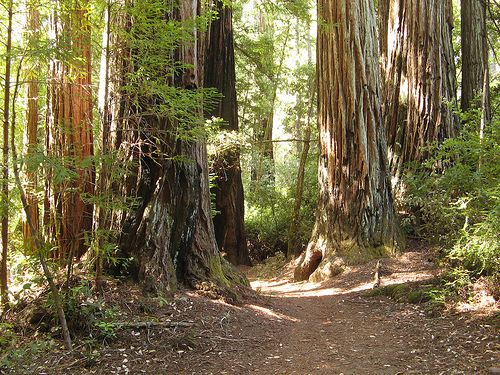 Mill Valley Tourism: 27 Things to Do in Mill Valley, CA | TripAdvisor