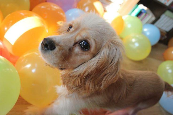 1 yaşına girmişim her yer rengarenk balon,2. yaşımı şimdiden iple çekiyorum