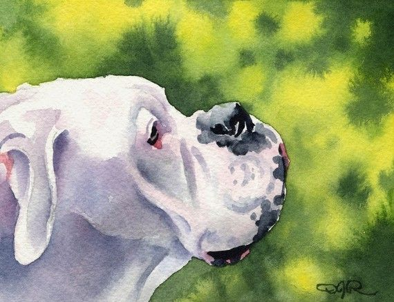 White Boxer Dog Signed Art Print By Artist Dj By