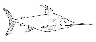 Resultado de imagen de pez martillo para colorear
