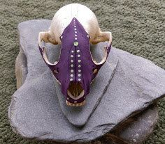 Purple and Green Possum Skull by PeaceLoveBones on Etsy