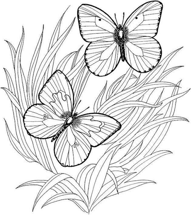 advanced coloring pages for adults who like to color adult coloring pages to print butterflies and grass