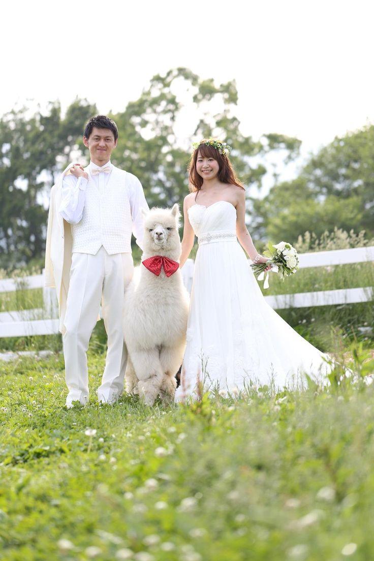 挙式の後はかわいすぎるアルパカと記念撮影♡♡♡ 那須での結婚式のアイデア一覧。ウェディング・ブライダルの参考に。