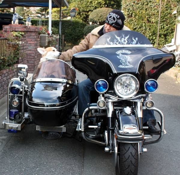 17 best images about Motorcycle Pet Carriers on Pinterest ...