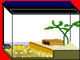 [Half and Half Tank] Instructions for making a half-and-half frog habitat