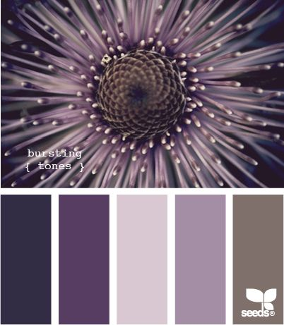 .: Color Palettes, Shades Of Purple, Burst Tones, Color Combos, Color Schemes, Master Bedrooms, Paintings Color, Bedrooms Color, Purple Purple