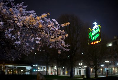 Portland cherry blossoms at dawn http://www.oregonlive.com/portland/index.ssf/2017/03/cherry_trees_have_reached_peak.html