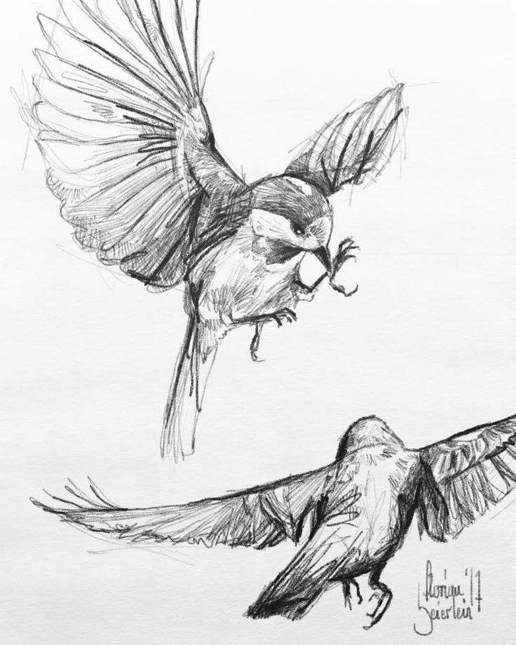 It is a photo of Sly Birds Flying Drawing