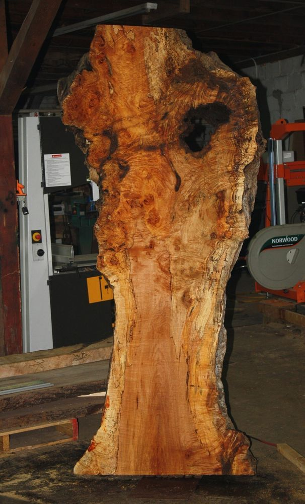 Maple Wood Tree ~ Best quot wide maple burl tree woodworking images on