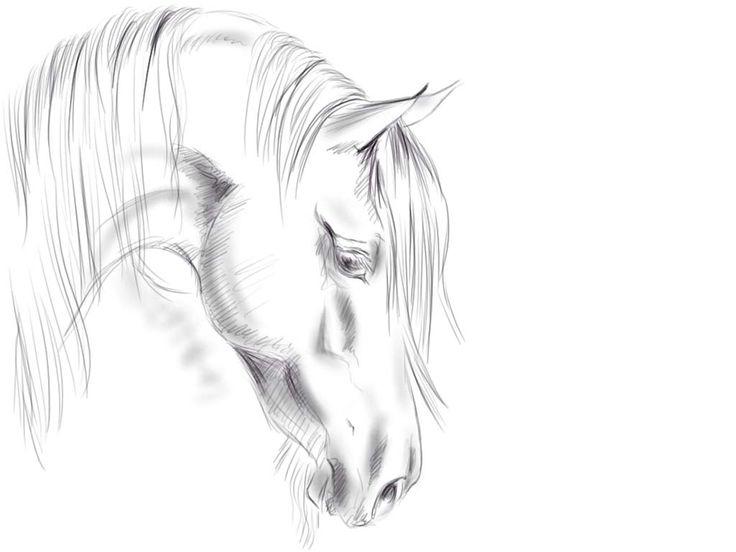 Beautiful Horse Head Tattoo | horse tattoos