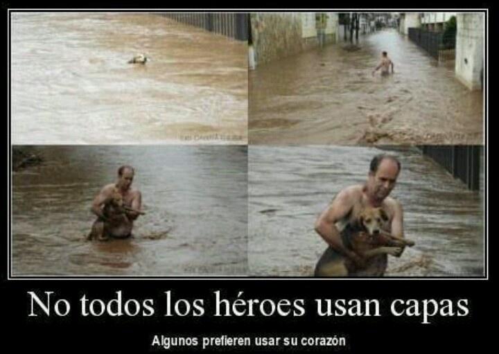 Amor a los animales. No todos los héroes usan capa. Algunos prefieren usar su corazón. - Not all heroes wear layer. Some prefer to use your heart.