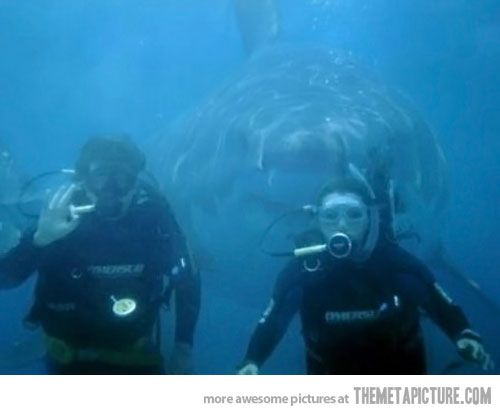 Photobomb Level: Shark! OMG I would have a freaking heart attack!!