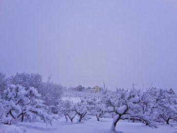 Iarna in Martie! Oare e alb de la ghiocei?