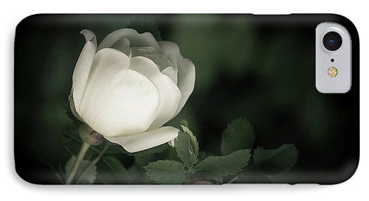 White Flower Of A Dogrose IPhone 7 Case for Sale.  Protect your iPhone 7 with an impact-resistant, slim-profile, hard-shell case.  The image is printed directly onto the case and wrapped around the edges for a beautiful presentation.  Simply snap the case onto your iPhone 7 for instant protection and direct access to all of the phone's features! photo, photography, artwork, buy, sale, gift ideas, zazzle, shop, discount, nature, dogrose, green, white, flower, botanical, garden, blossom, petal
