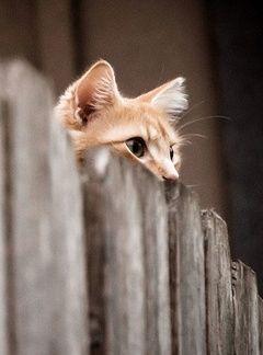 Neugierige Katze                                                                                                                                                                                 Mehr