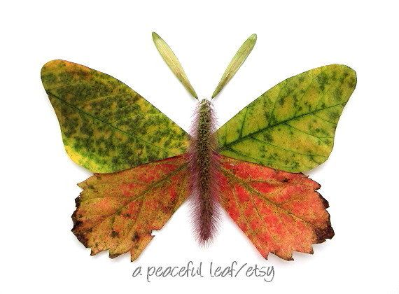 Leaf moth photo. Autumn leaves wall art. Colorful by APeacefulLeaf, $25.00