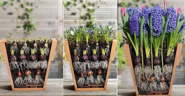 Ez a kertész furcsa módon ültette el a virággumókat. A következő módszert imádni fogod! - Filantropikum.com