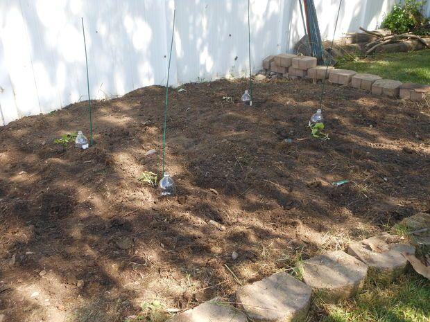 diy drip irrigation bottles