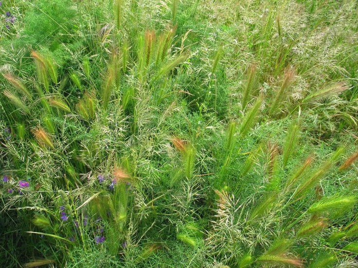 Blog over een goed werkende methode voor de compostering van grassen en kruiden, in de praktijk getest, openhartig.
