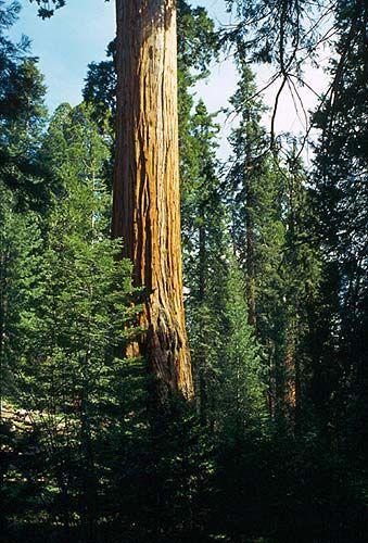 Cestopis Kalifornie.