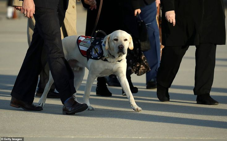Pin By Nicole Branten On Hot Dogs Service Dogs Dogs Sully
