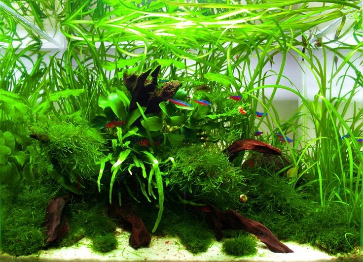 contest gallery 2009 aquarium. Black Bedroom Furniture Sets. Home Design Ideas