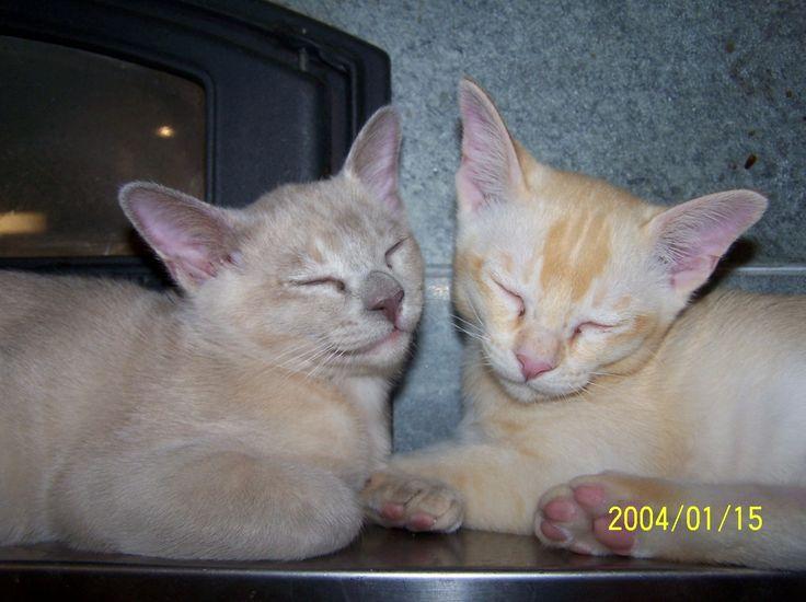 Miina ja Vilperi