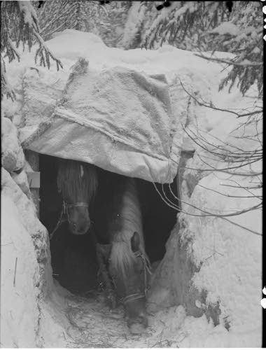 Finnish camouflage concealment for horses during the Battle of the River Kollaa which took place in the Winter War specifically December 7, 1939 - March 13, 1940 and ended with success of Finns.