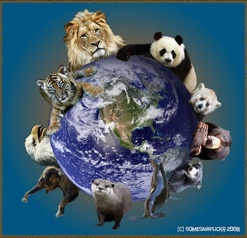 sharing our planet - it's not just us...: