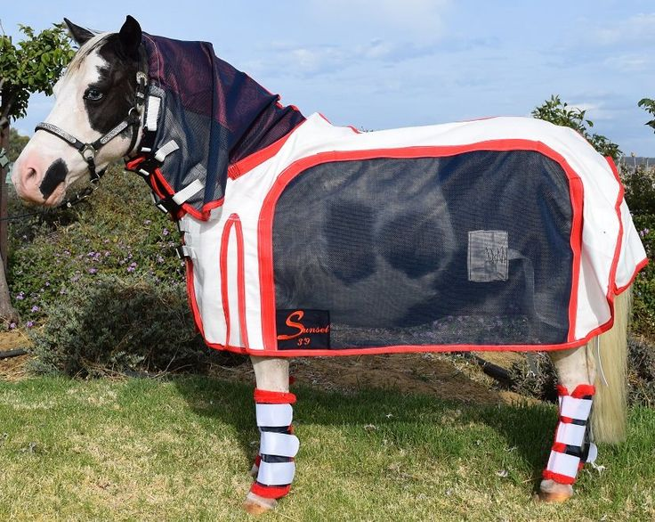 94 Best Mini Rugs Images On Minis And Horses Minicraft Horse Ideas