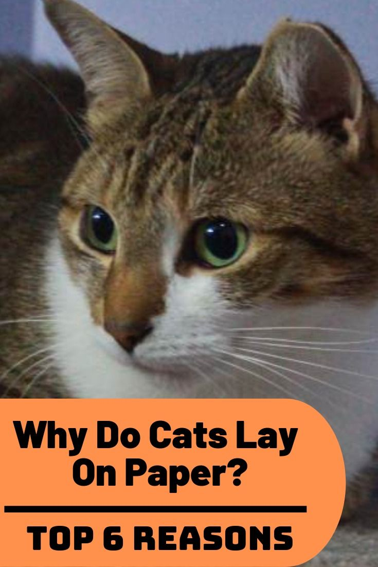 Why Do Cats Lay On Paper 6 Reasons Why Cats Like Paper Cats Crazy Cats Cat Safe Plants