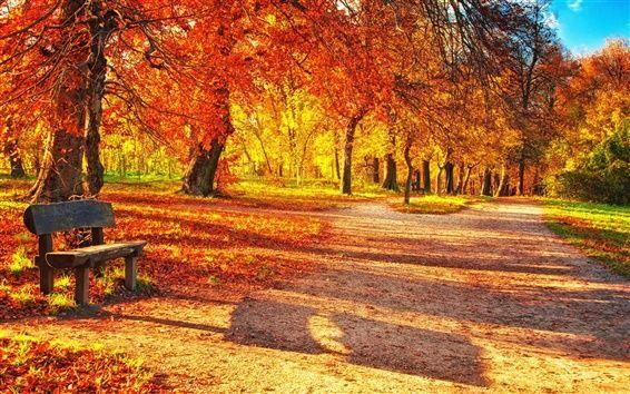 秋の公園、紅葉、木のベンチ、日光 壁紙プレビュー