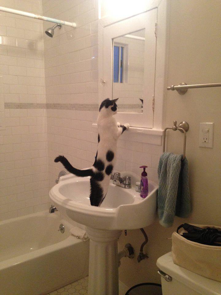 https://www.facebook.com/lifewithcats/photos/a.190065367694761.46337.189533371081294/813491595352132/?type=1
