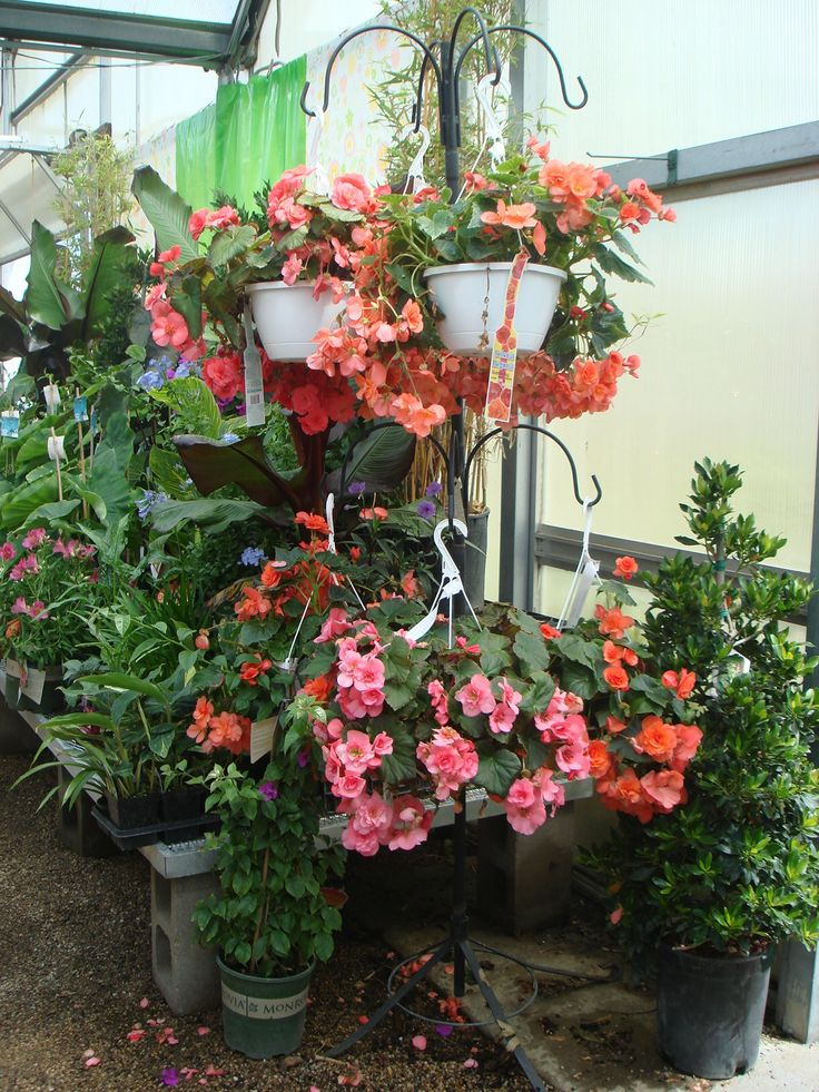 The 25+ best Hanging basket stand ideas on Pinterest ... on Hanging Stand For Plants  id=48727