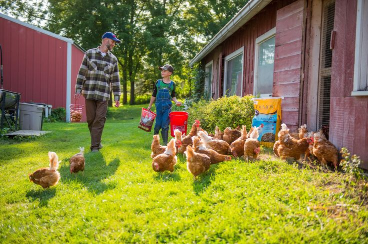 Just posted! Thinking outside the coop: 8 common myths about raising backyard poultry  https://garceauatkinson.wordpress.com/2017/06/20/thinking-outside-the-coop-8-common-myths-about-raising-backyard-poultry/?utm_campaign=crowdfire&utm_content=crowdfire&utm_medium=social&utm_source=pinterest