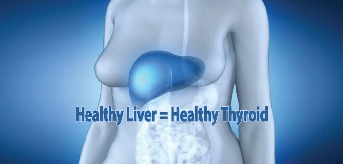 Did you know that the majority of T4 to T3 conversion doesn't happen in your thyroid gland, but in your liver? Liver and thyroid connection! Taking thyroid medication but STILL not feeling better??? Ƹ̵̡Ӝ̵̨̄Ʒ  Your liver could be to blame, learn more here ▼  http://thyroidnation.com/healthy-liver-depends-healthy-thyroid/  #Thyroid #Liver