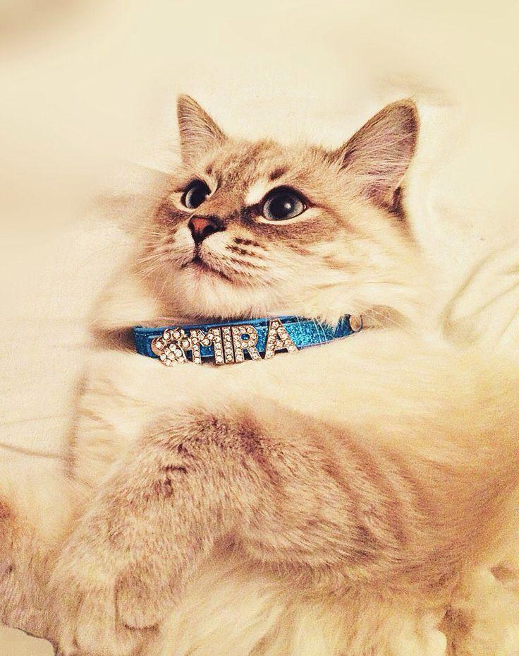 Custom-Made Bling Cat Collar