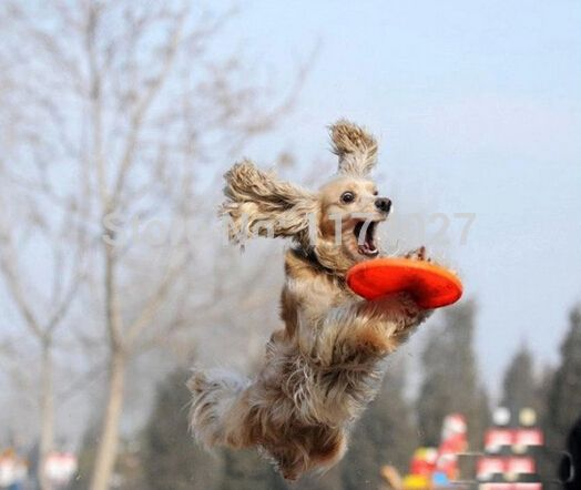 Free Shipping Silicone Frisbee Flying Disc Tooth Resistant Outdoor Large Dog toys other
