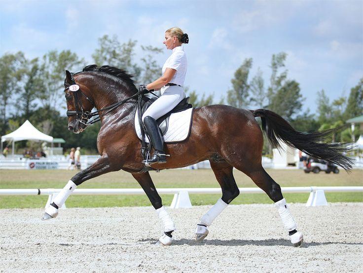 Yvonne Barteau - KYB Dressage - Dressage Training - Dressage Horses For Sale