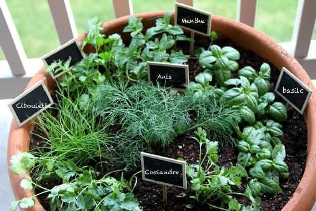 jardin aromatique dans un pot en terre