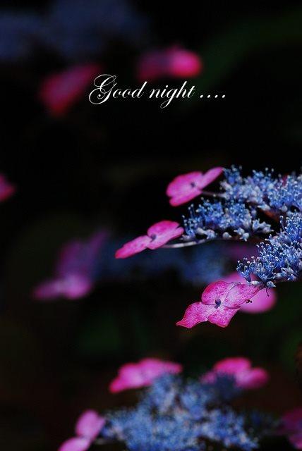 ❥ Good Night...