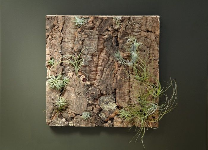 How To Create A Cork Tillandsia Garden We Carry Cork Bark