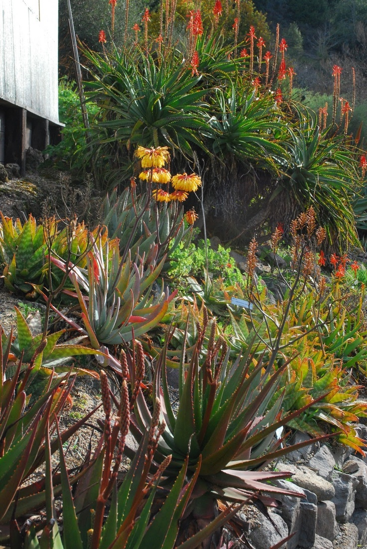 Garden Design South Africa