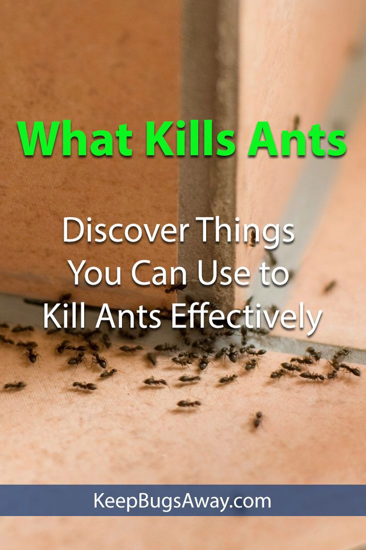 What Kills Ants Everything You Need To Know Kill Fire Ants Ants Get Rid Of Ants