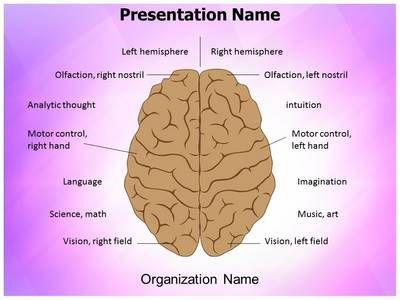 Best Brain Powerpoint Templates  Human Brain Powerpoint