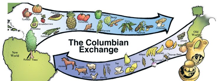 Columbian exchange diseases essay