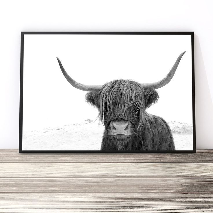 Black and White Highland Cow Print | Highland Cow Art Print | Cow Photography Print | Living Room Ideas | Black and White Prints | Art Prints for Home Online Australia by Little Ink Empire