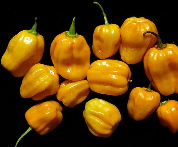 Aji Umba Pepper Seeds, Yellow (Capsicum chinense) Also As known as Ojemma or Adjumba A rare variety from Surinam !